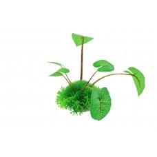 Planta decorativa Hemianthus&Echinodorus Cordifolius 10cm