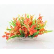 Planta decorativa Cryptocoryne model Flamingo 10cm