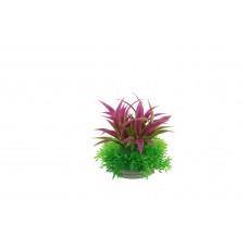 Planta deocrativa pentru acvariu Hemianthus & Ludwigia Grandulosa 10cm