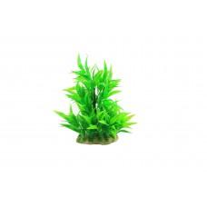 Planta decorativa pentru acvariu Microsorium 16cm