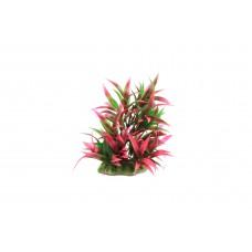 Planta decorativa pentru acvariu Rotala Macrandra 16cm