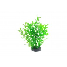 Planta decorativa pentru acvariu Micranthemum 19 cm